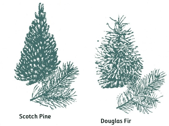 Types-of-Christmas-Trees-010
